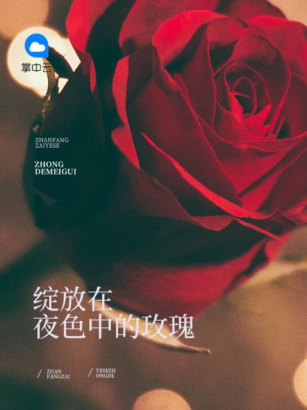 绽放在夜色中的玫瑰