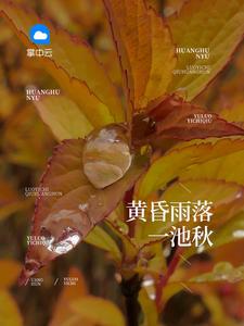 黄昏雨落一池秋